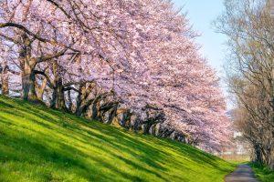 Борсовата пролет идва